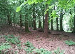 Enna Woodland 2